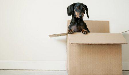 箱に入った子犬が上半身を出してこちらを見る画像