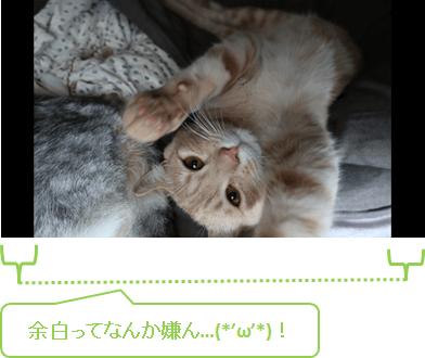 filmora_フィモーラ_起動_クリップ追加_オートクロップ_方法