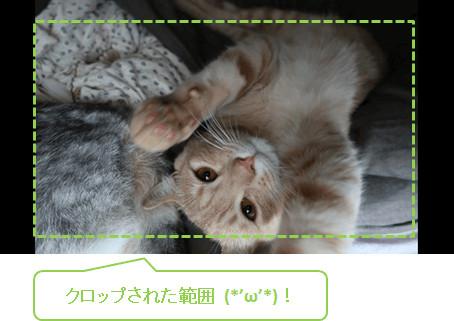 filmora_フィモーラ_起動_クリップ追加_オートクロップ_befor-after2