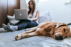 床に寝そべるゴールデンレトリバーの無効でノートパソコンを膝に抱えて作業をする髪の長い女性のいる室内風景
