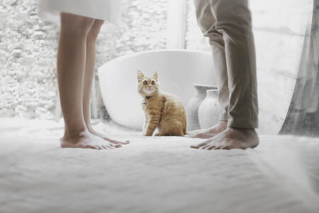 話し合うカップルを見つめる猫の写真